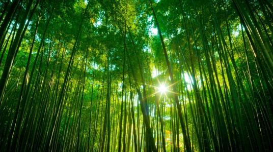 断节的竹子矢量图